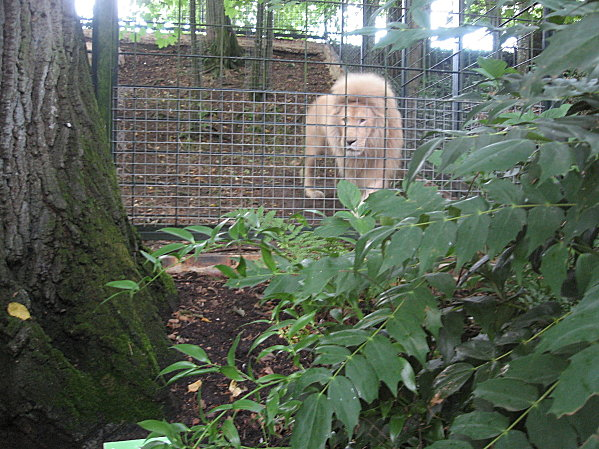 robe;Zoo de Beauval 27 juillet 2009 300