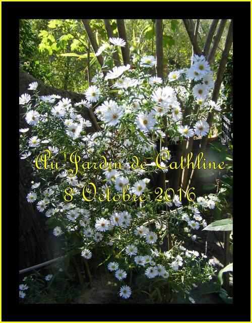 Jardiner avec la lune du 11 au 20 Octobre