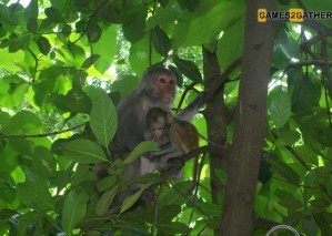 Hidden animals - Baby monkeys