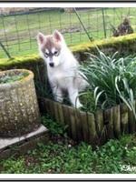 Raïko (2,5 mois)