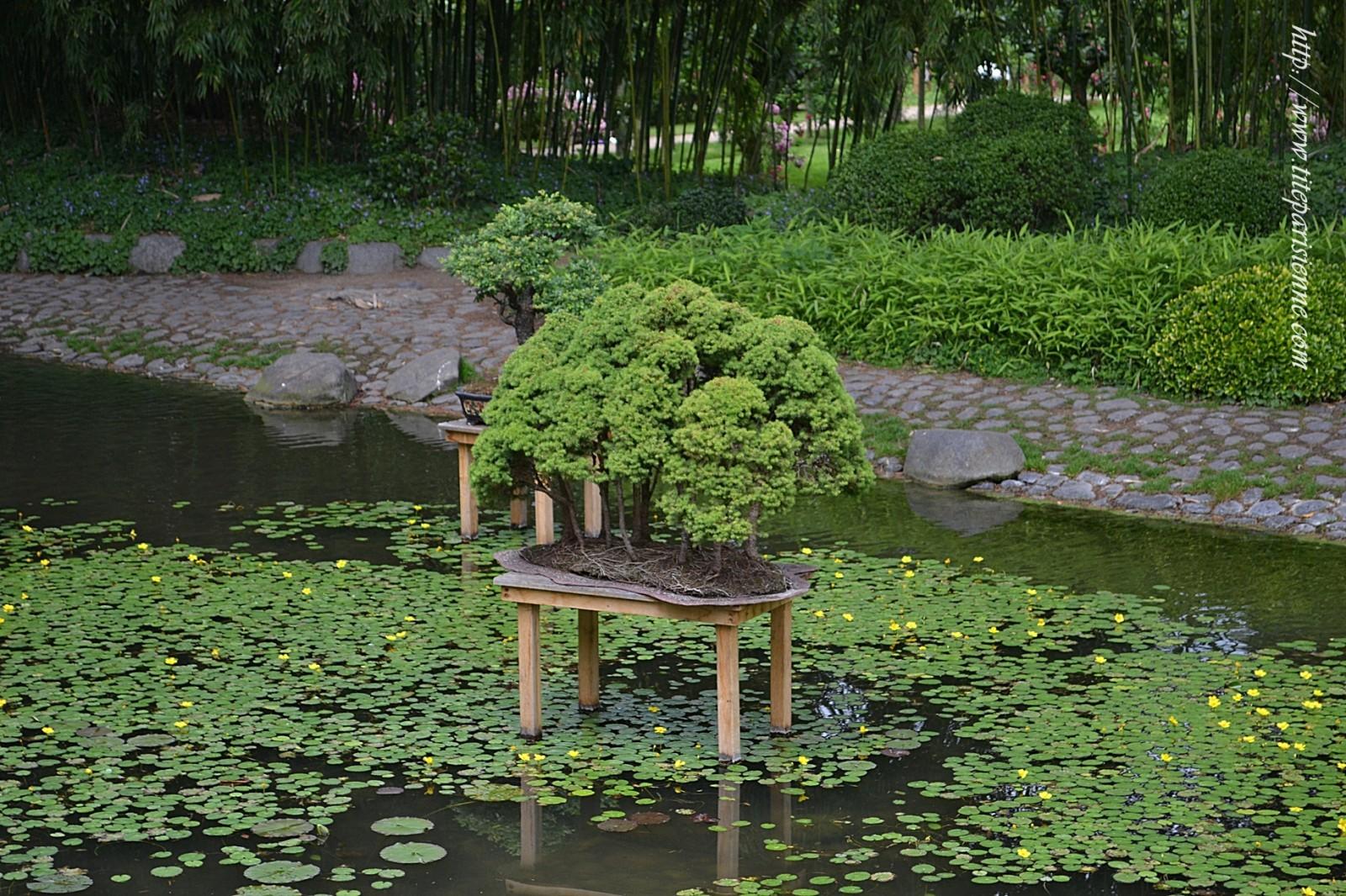 Jardins albert kahn le jardin japonais une fleur de paris for Le jardin hivernal du off paris seine