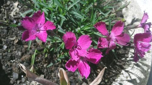 Les fleurs s'éclatent !