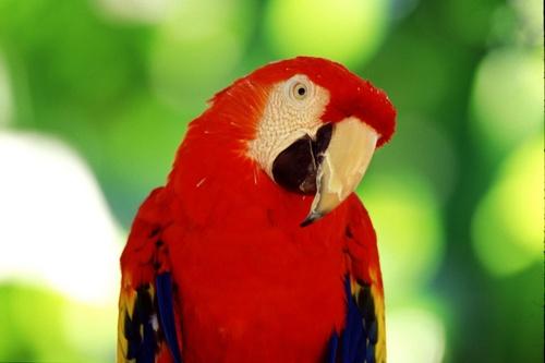 Divers type de perroquets