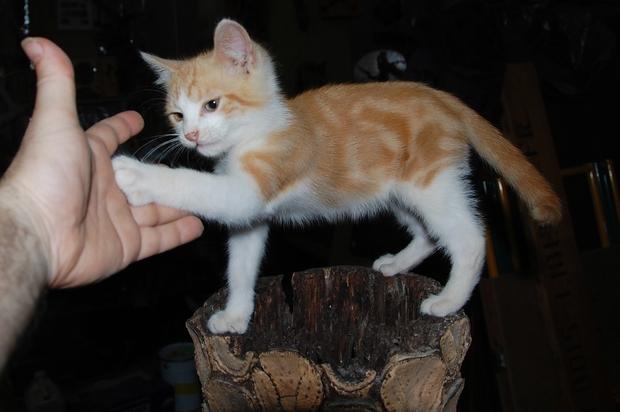 chaton11juilletf