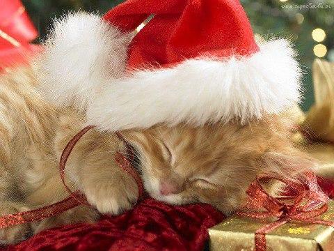 Chatons de Noël