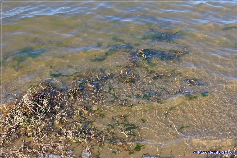 Port du Rocher et près salés est - La Teste de Buch - Février 2016 - 4/12