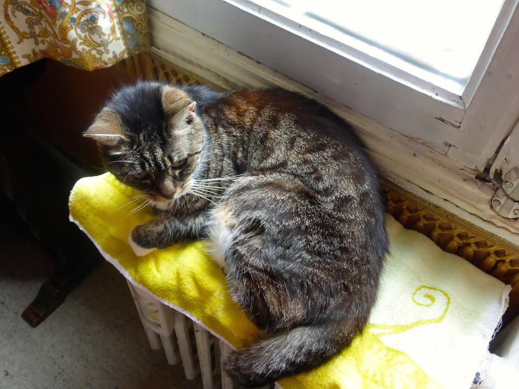 Quand le bonheur d'un chat ne tient qu'à un radiateur!