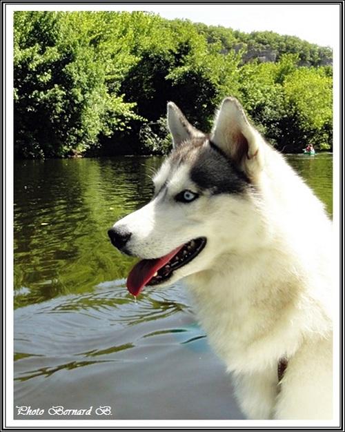 Kiska (2,5 ans)