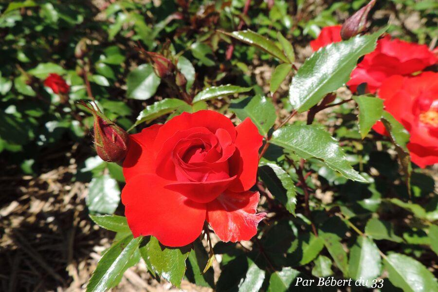 le parc floral de Bordeaux dept 33
