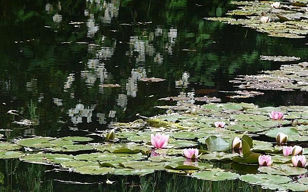 Giverny-Etang-Nympheas---31-mai-2010--Pan343.jpg