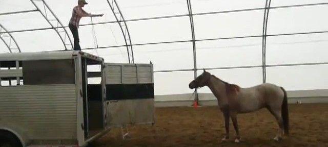 Actualité conseil cheval & équitation : Méthode différente pour monter un cheval dans un van