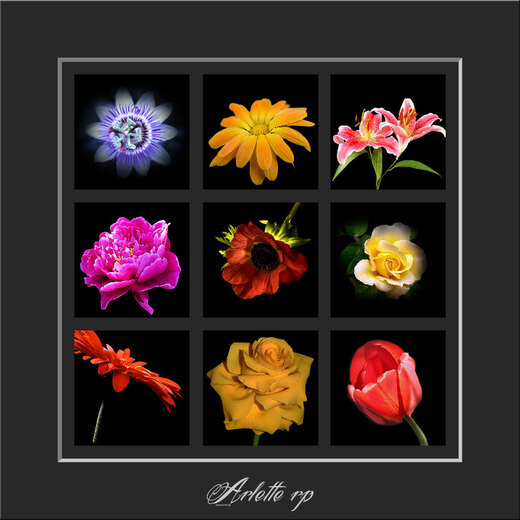 Fleurs divers 1