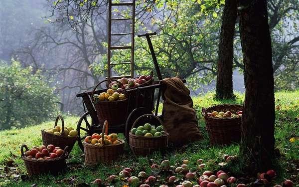 La Romance de la tarte aux pommes