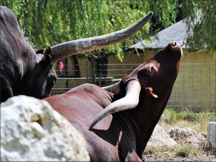 Photo de porc-épic (Ferme exotique - Cadaujac)