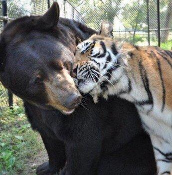 News : Animales