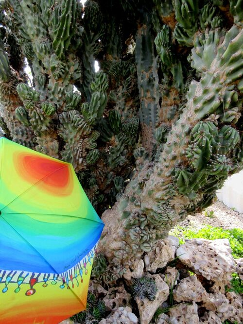 Arbres d'exception et parapluies rares