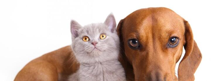"""Résultat de recherche d'images pour """"aimer de chats"""""""