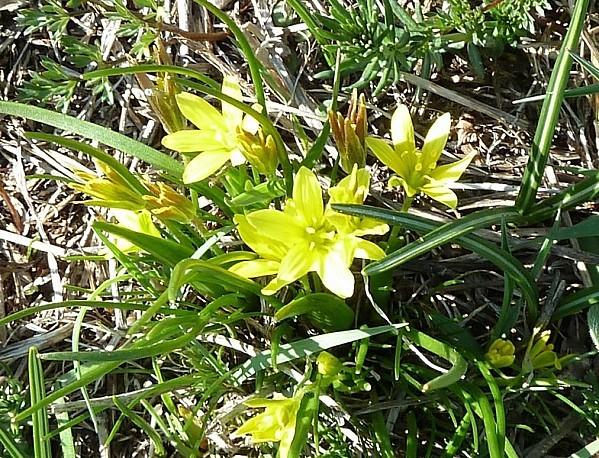 0 N fleur (5)