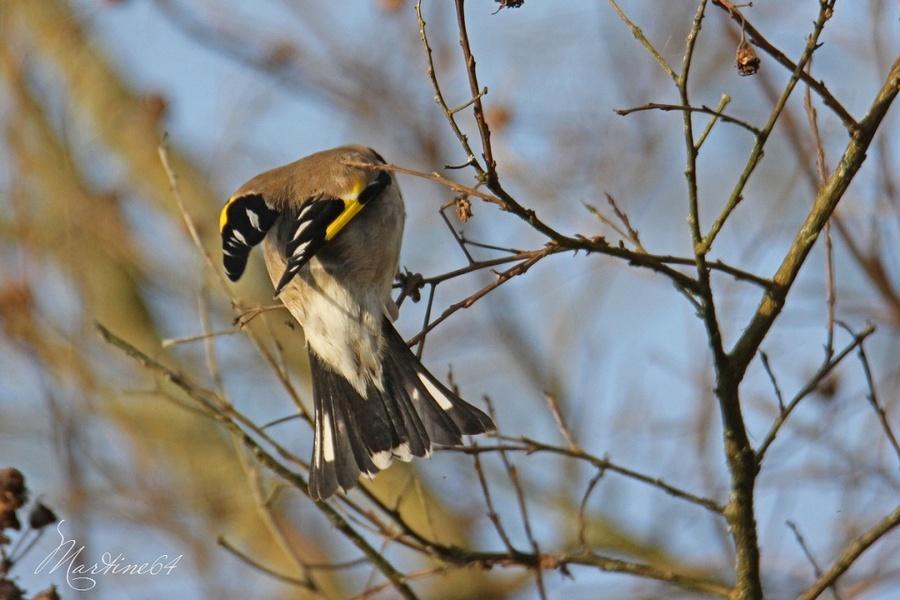 Les oiseaux du jour .... ( 2 )