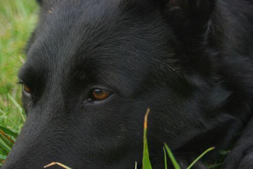 Qu'es-ce que l'anxiété de séparation du chien, comment y faire face ?