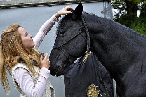 la belle et le cheval