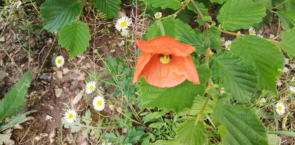 quelques clichés des fleurs du jardinet