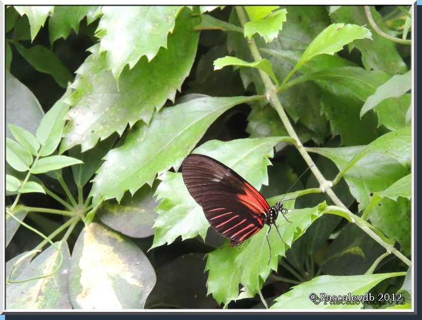Le Paradis de Papillons à Sanguinet - 3/9