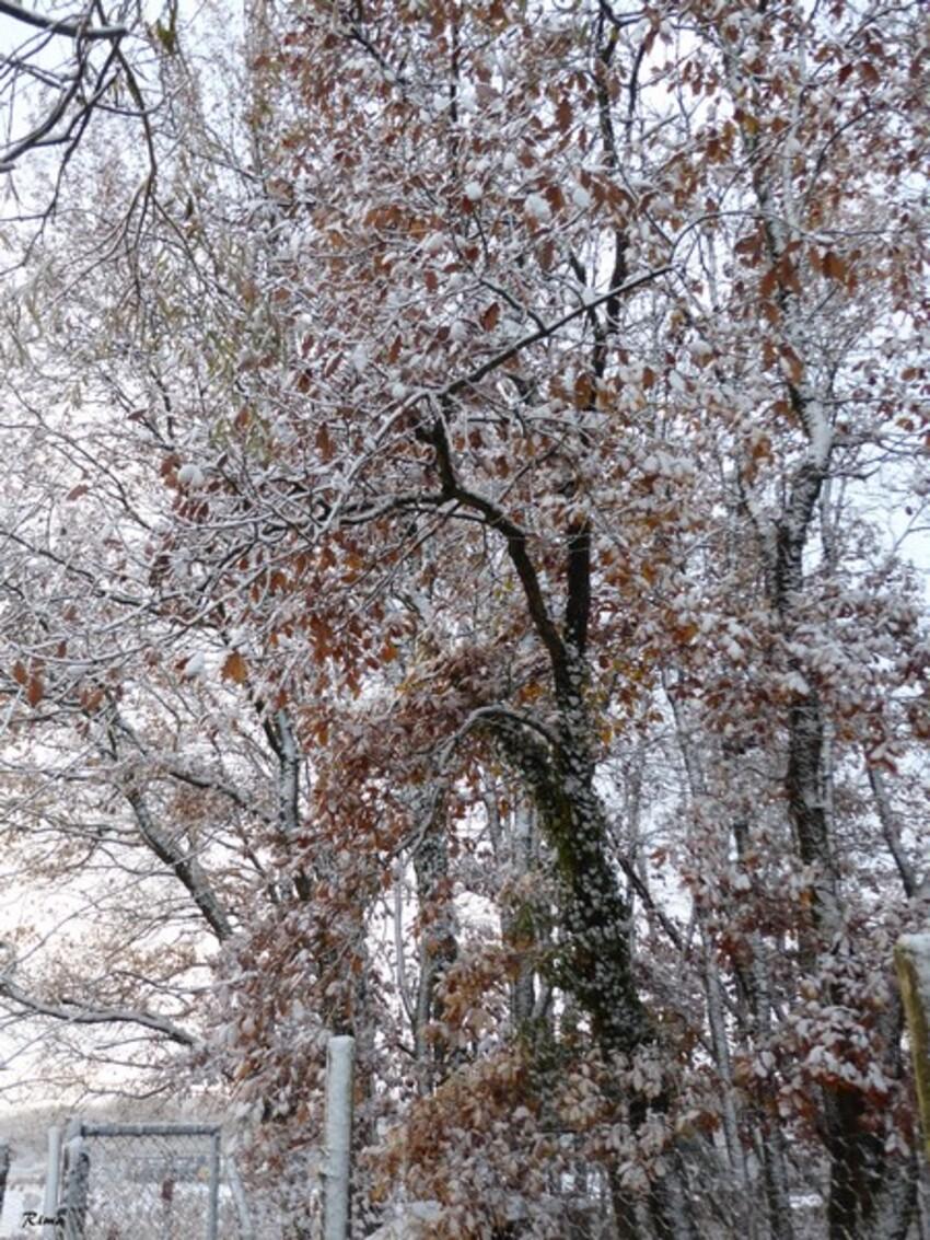 Neige de début Décembre,