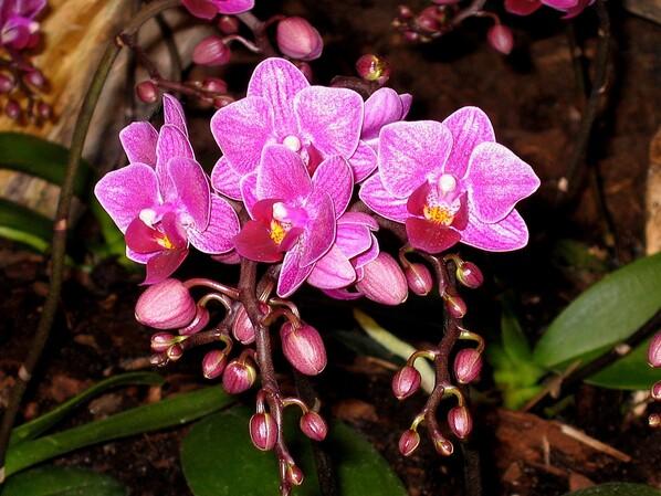 Expo Orchidées