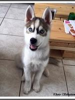 Neïko (3 mois)