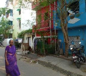 femme en sari et vache sacrée (chennai)