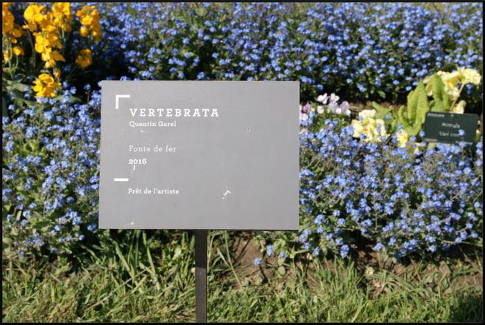 Vertébrata. jardin des plantes.