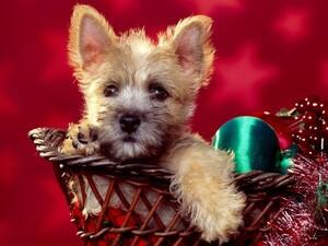 http://www.memoclic.com/11-2969-600x450/fond-ecran-cadeau-de-noel.jpg