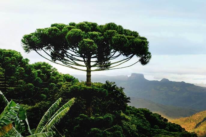 Avez vous déjà vu un arbre danser?