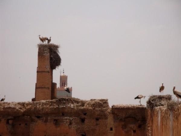 Palais-Badia--les-cigognes.jpg