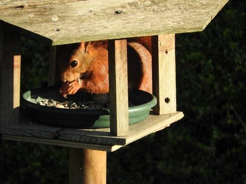 ... maugeoire pour oiseaux...