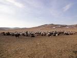 Petit concentré de Mongolie...