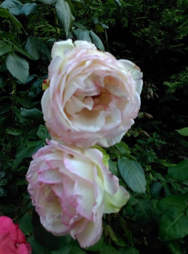 Coucou fleuri !!!