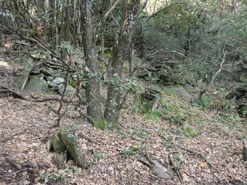 Étranges édifices de pierres dans la forêt