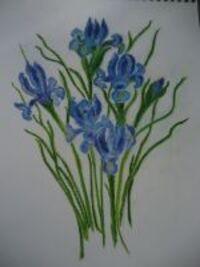 les Iris de morganne