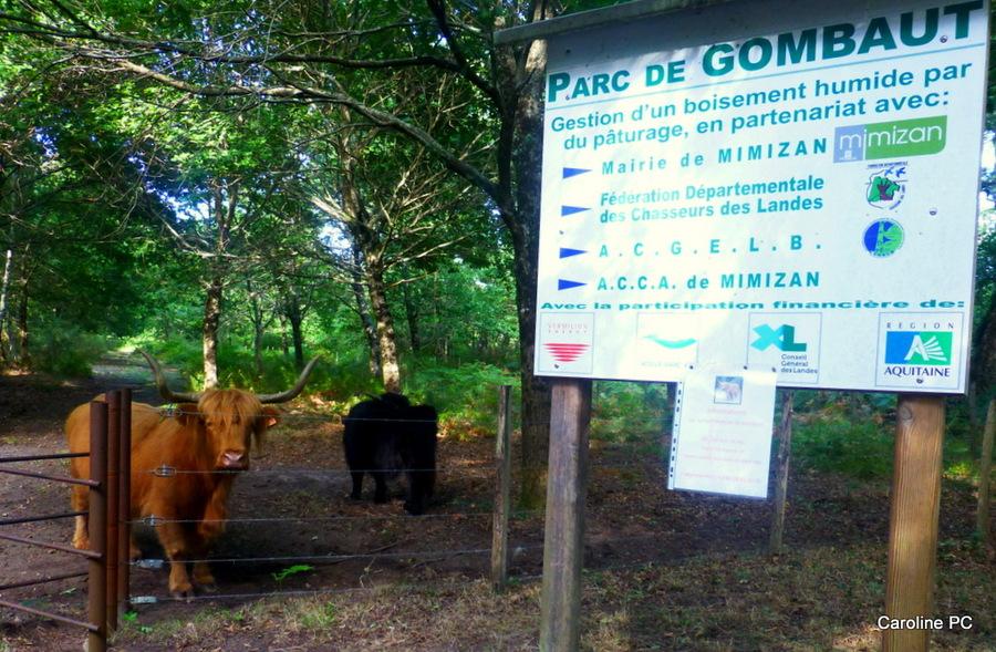 Au parc de Gombaut