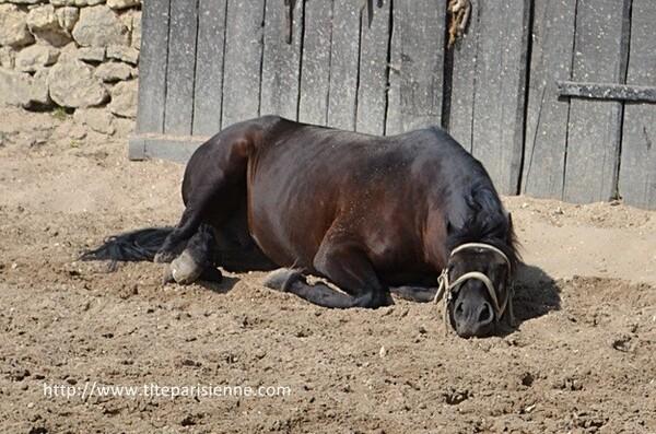Les chevaux de Provins