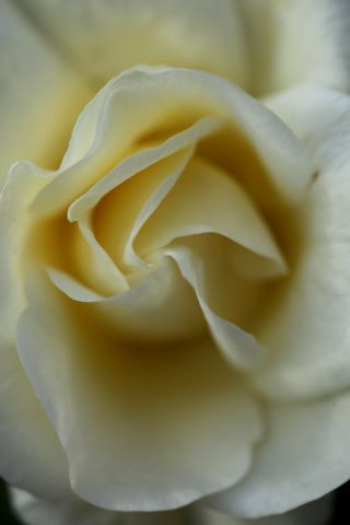 Roseraie - Novembre (4/4)