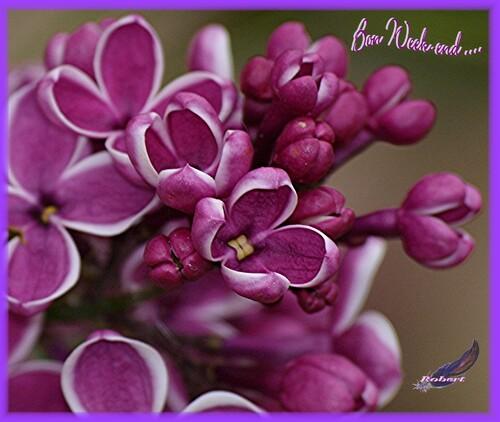 Quelques fleurs pour vous souhaiter un bon dimanche....
