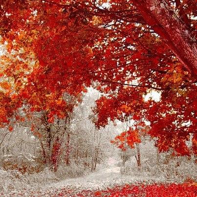Après ce merveilleux été indien, la neige s'annonce pour fin de la semaine
