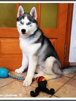 Naïko (3,5 mois)