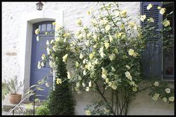 - Un si joli village: Saint lou de Naud