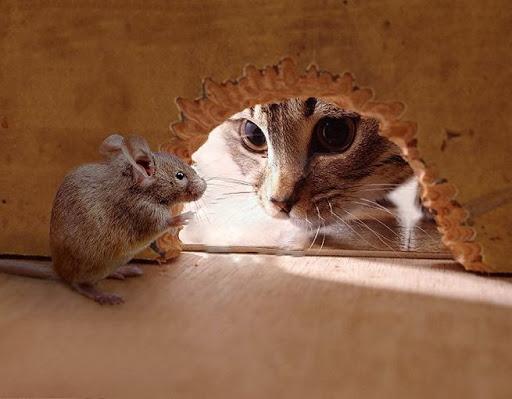 Chat et souris , amis ou ennemis ?Voyons cela en images !!! - BONHEUR DE  LIRE