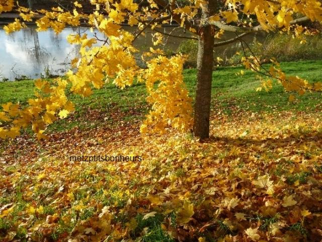 Chanson d'automne....
