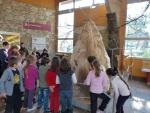 Visite du musée de la préhistoire de Tautavel